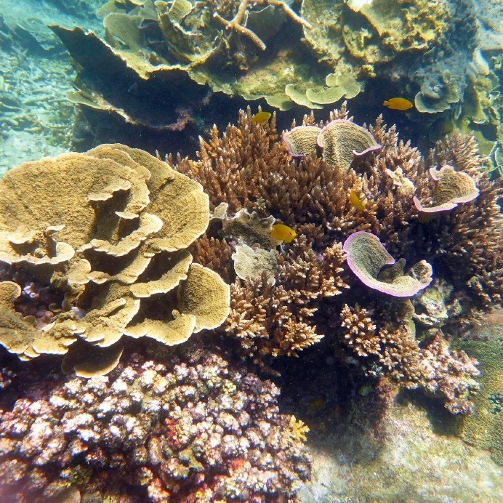 Coral-Island-Tioman-Malaysia-13