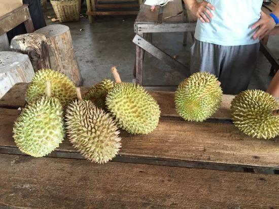 bao-sheng-durian-farm (1)