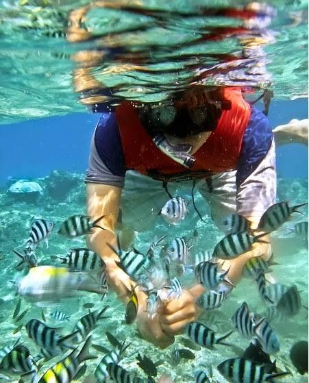 snorkelfiltered-l