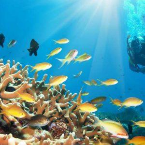 advanced adventurer diver course